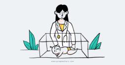 Baby In Ventilator